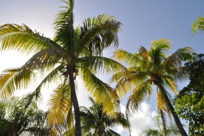 Find Your Beach: Tips for a Breathless Punta Cana Excursion